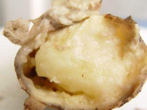 Кольцевая и бурая гниль картофеля