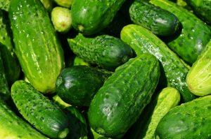 Диагностика патогенов овощных, декоративных, плодовых и ягодных культур