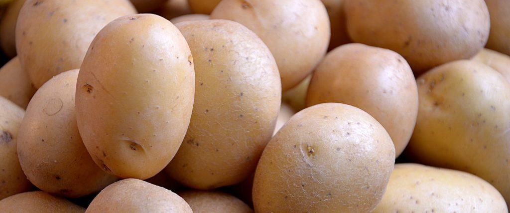 Диагностика патогенов картофеля